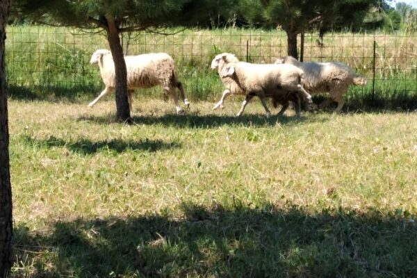 Agriturismo B&B Tre di Spade Animali